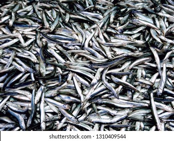 Fish anchovy background on ice in fishermen market shop. Seafood european pile of anchovy pattern on ice. Black sea anchovies display in family store. Heap small little blue encrasicolus fish for sale