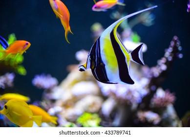 fish in aquarium for background