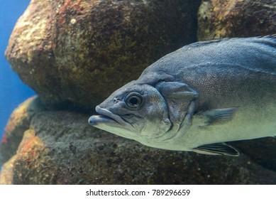 fish in aquarium close-up