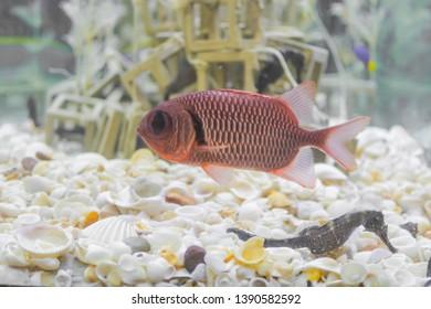 Artificial Aquarium Images Stock Photos Vectors Shutterstock