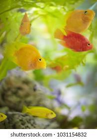Fish in aquirium