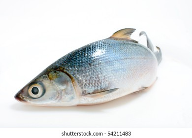 Fish (Asian sea bass isolated on white)