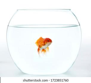 fish background glass animal gold