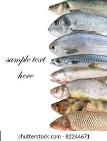 Fish background on white