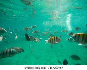 Fish in the Bay of Angra, Lagoa Azul Ilha Grande (Big Island)- Angra dos Reis - Rio de Janeiro - Brazil - Shutterstock ID 1457200967
