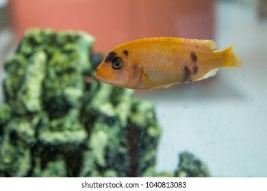 Fish behind the glass . Aquarium fish. fishes