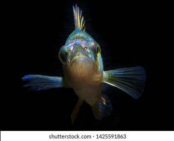 fish black background lake water face eyes view
