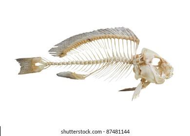 Fish bone isolated on white background