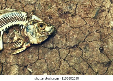 Fish bone on dry cracked soil. Concept for climate change, dry environment or food crisis problem.