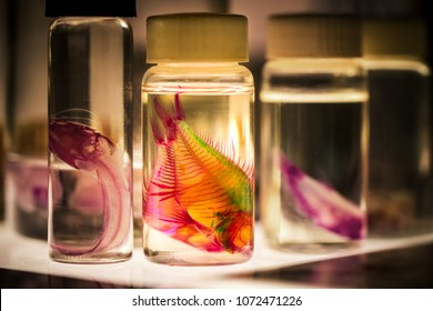 Fish in Bottles for Biological Studies