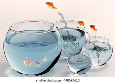 fish bowl jumping water underwater freedom