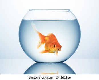 Fish bowl with swimming gold fish