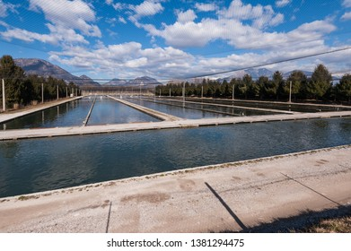 Fish breeding. Baths and protective nets. Trout fish farm