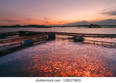 fish breeding at sunset