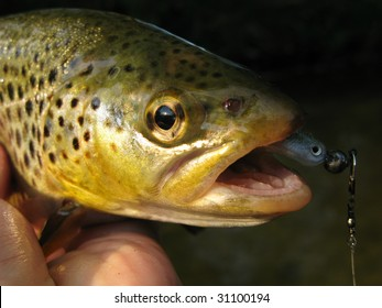 Fish (Brown trout) catched by casting