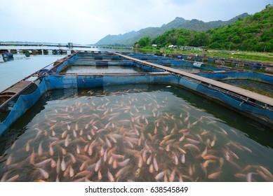 fish cage in Mae Klong river, Kanchanaburi, western central Thailand