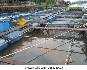 The fish cage that floats in the river is used to raise fish, built with blue plastic tanks, steel pipes, wooden panels and meshes.Rainy Sky Background.soft focus,Select focus
