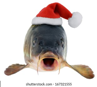 fish carp in Santa Claus red hat isolated on white background