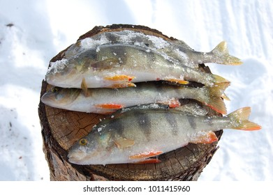 The fish caught in winter.