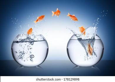 fish change concept