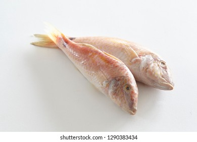 Fish clipping above