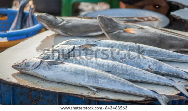 Fish Closeup Royapuram Fishing Harbor Kasimedu Stock Photo