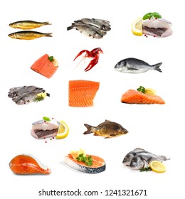 Fish collage isolated on white