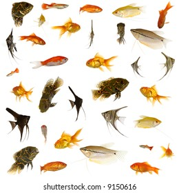 Fish collection with many different tropical fish.