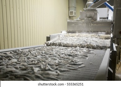 fish conveyor, fish processing plant