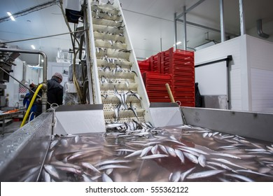 fish conveyor, in the fish processing workshop