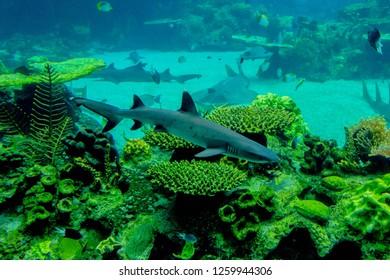 fish and coral in the aquarium