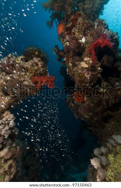 Fish and coral  in the Red Sea