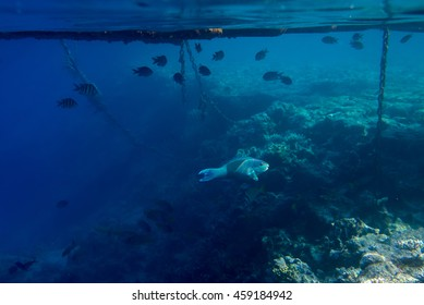 fish and coral underwater off the coast of Africa