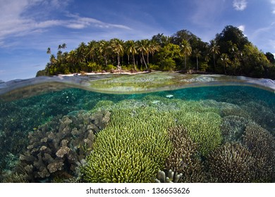 Fish and corals grow in shallow water near a tropical Pacific island.  Competition for space to grow, sunlight, and planktonic food is fierce on Indo-Pacific reefs.