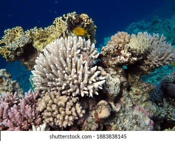 Fish and Corel Reef with Fire and Hard Coral