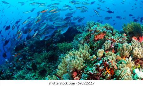Fish dance over the reef komodo Indonesia