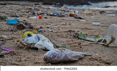 fish dead because people put garbage to the sea
