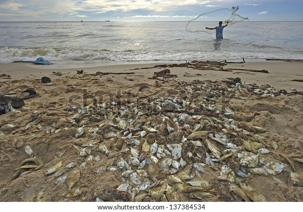 fish dead on the beach because freshwater flow to the sea
