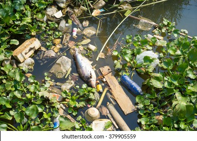 fish die due to water pollution from factory