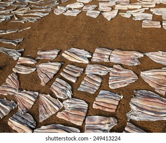 Fish drying on the net on the beach (Sri lanka)