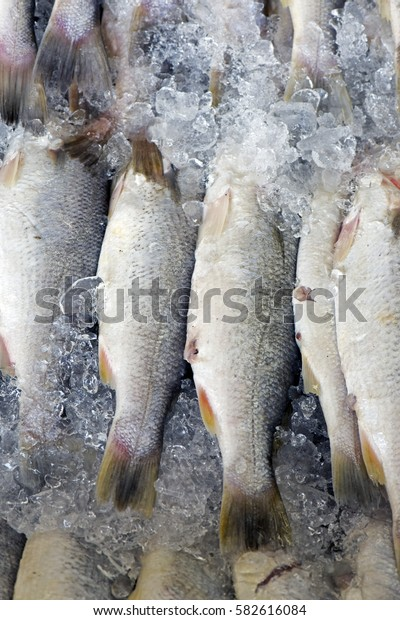 Fish exposed in fish market for sale to the consumer