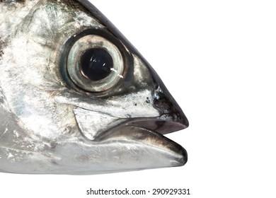 Fish Eye Close-Up  ,isolated on white background