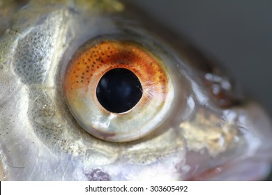 fish eye in macro