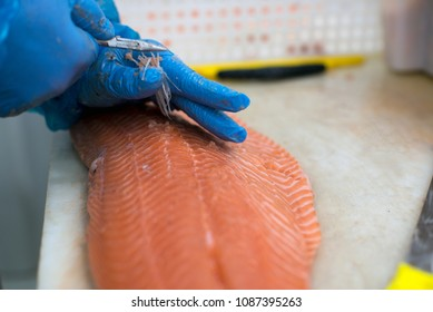 fish factory, trout fish processing