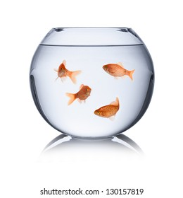fish family in fishbowl