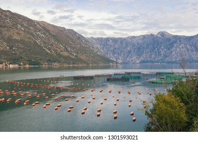 Fish farm in Adriatic.  Montenegro, beautiful view of Bay of Kotor  on cloudy autumn day
