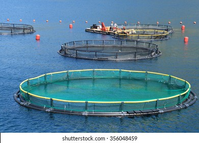 Fish farm in the bay of Kotor, Montenegro