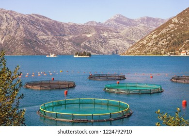 Fish farm in Mediterranean. Montenegro, Adriatic Sea, Bay of Kotor and two small islands