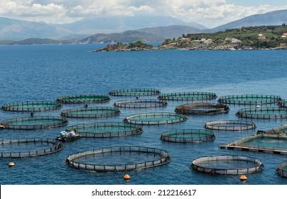 fish farm on Corfu island, Greece