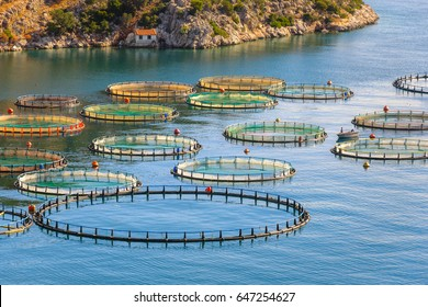 Fish farming in the sea, Greece. Cage system of fish cultivation